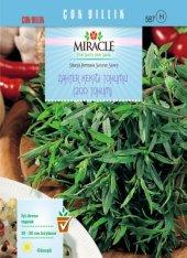 Miracle Zahter Kekiği Tohumu (200 Tohum) 10 Adet