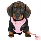 Trixie Yavru Köpek Göğ.tasma&kyış,23 34cm 2m 10mm