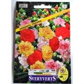 Karanfil Çiçeği Tohumu 1 Paket***