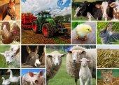 çiftlik Hayvanları 2000 Parçalık Kolaj Puzzle (Grafika)
