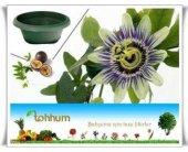 Passiflora* 5 Adet Tohum+saksı+toprak
