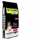 Proplan Somonlu Hassas Yetişkin Köpek Maması 16,5 Kg