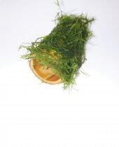 Karides Evi, Moss Sarılı Bambu Ev