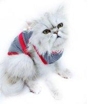 Strıpe Red Teddy Atlet By Kemique Kedi Kıyafeti Kedi Elbisesi