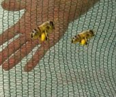 Arı Tülü Arı Filesi Bağ Koruma Filesi Üzüm Filesi Sera Örtüsü Sera Gölgeliği 2x10 20m2 35 Lik