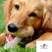 10 Adet Köpek Çiğneme Kemiği 100 Manda Derisi