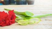 Aloe Vera Bitkisi Jel İçin Yaprak 1 Kg,2,5 Yaşında...